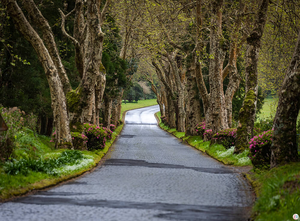 Road towards Garden of Lagoa das Furnas, São Miguel Island, Azores