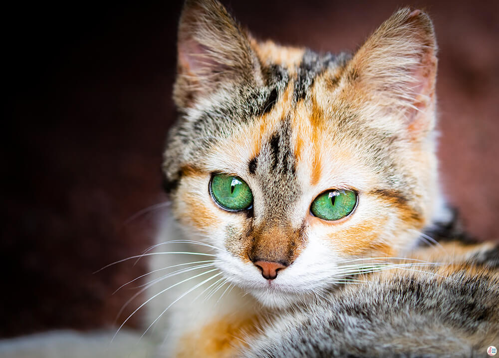 Beautiful cat with green eyes on São Miguel Island, Azores