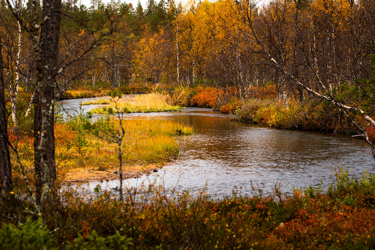 Autumn colors along Kakslauttanen river, Inari, Lapland, Finland