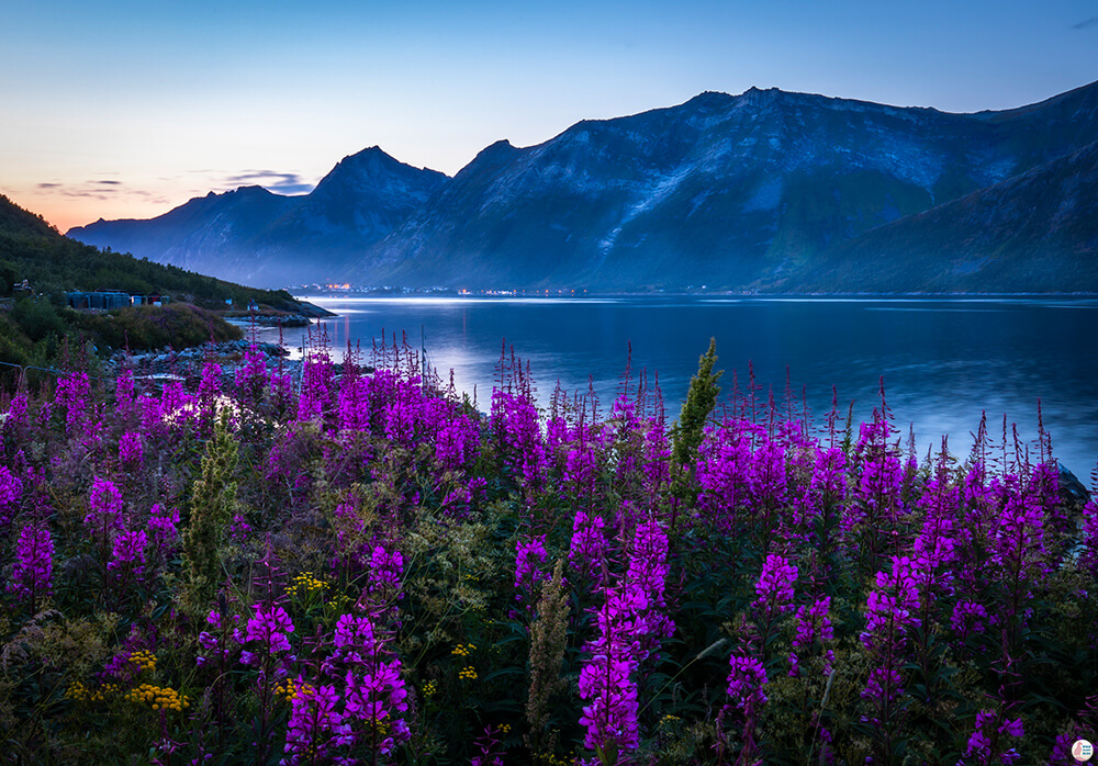 Fjordgård landscape, Senja, Northern Norway