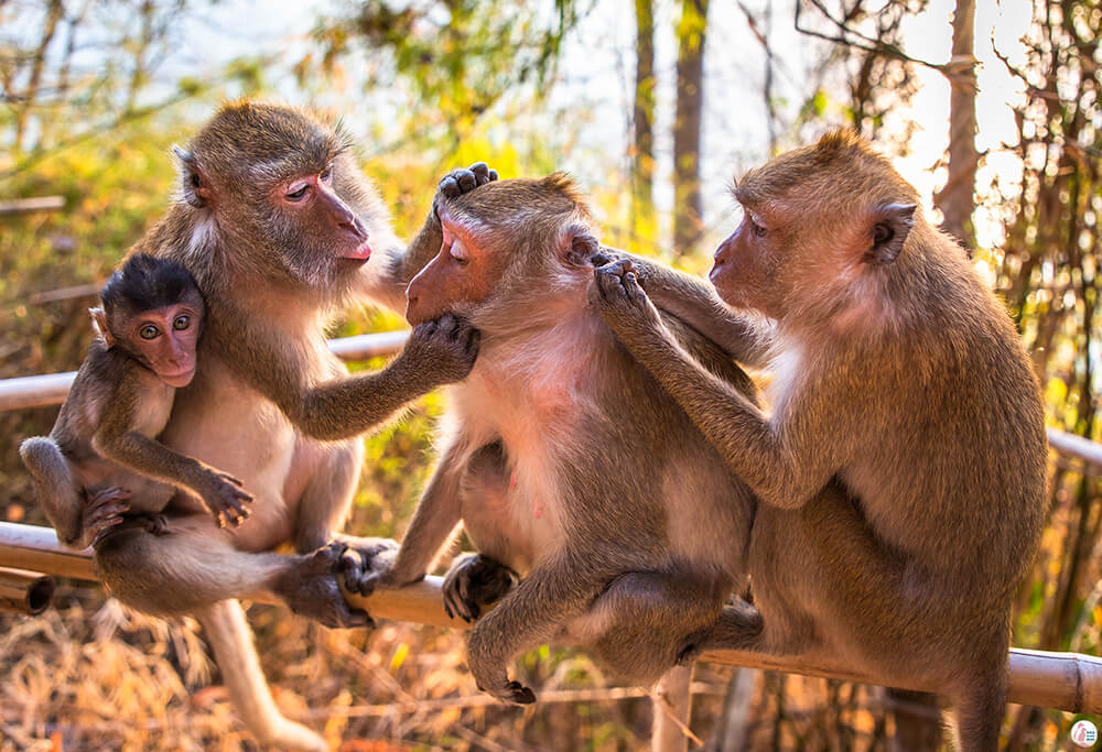 Macaques on Monkey Trail, Best Viewpoints to Hike and Photograph in Krabi, Thailand