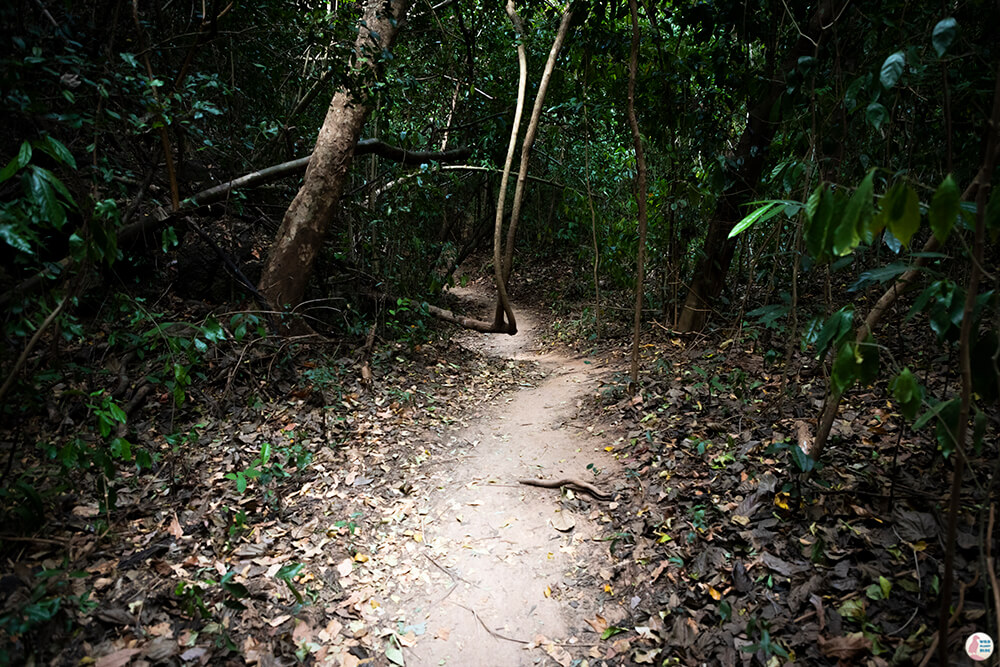 Jungle walk on Hong Island, Krabi, Thailand