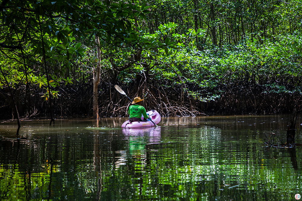 One Day Kayaking on the Tha Pring River in Than Bok Khorani National Park, Krabi, Thailand