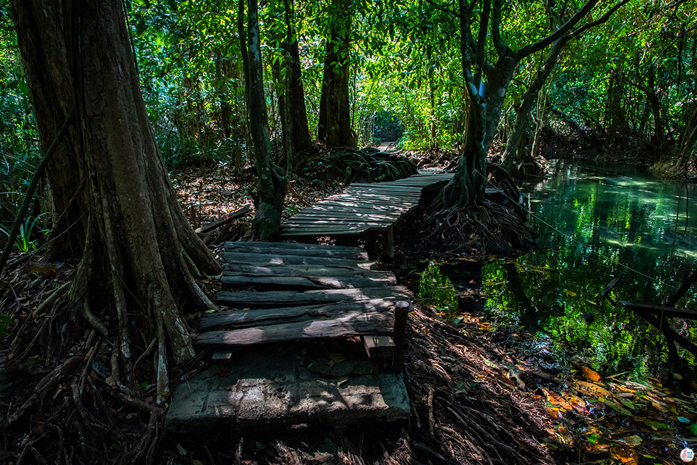 Jungle path at Long Klong Srakaew, Than Bok Khorani National Park, Krabi, Thailand
